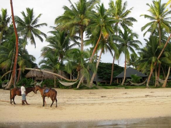 Beachouse & Horses
